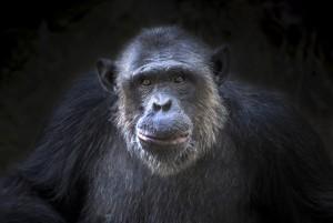 Abe i London Zoo